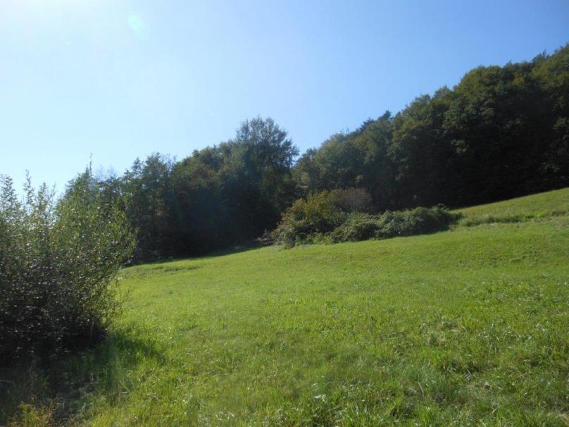 Sonniger 1.353m² Baugrund in Urscha bei Gleisdorf